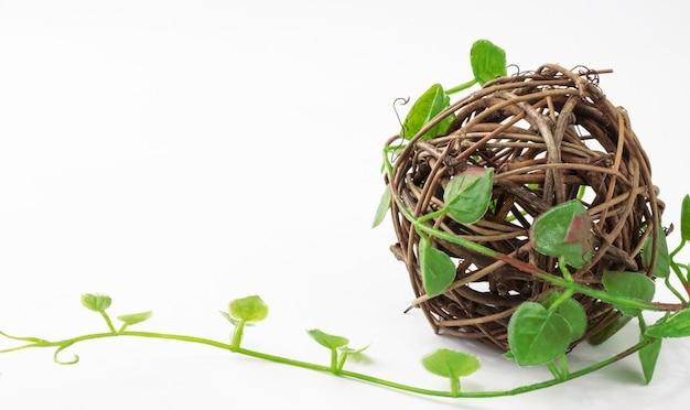 Kula rotanu splatana winorośli zielonych roślin na białym tle