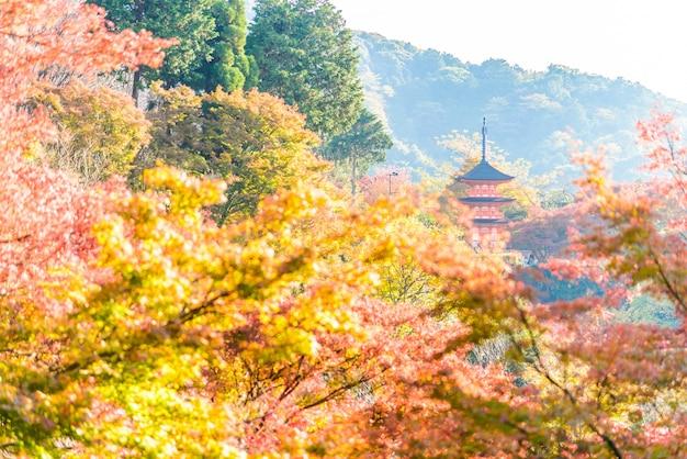 Kultura japonia sanktuarium buddyjski