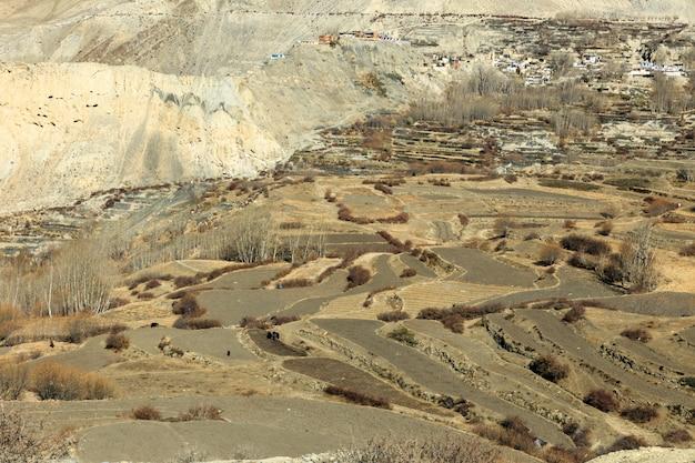 Kultywujący pola w himalajach, nepal