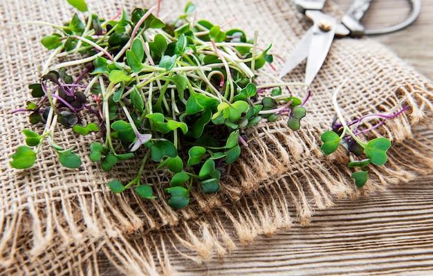 Kupa rzodkiewki mikro zieleniny na starej drewnianej powierzchni