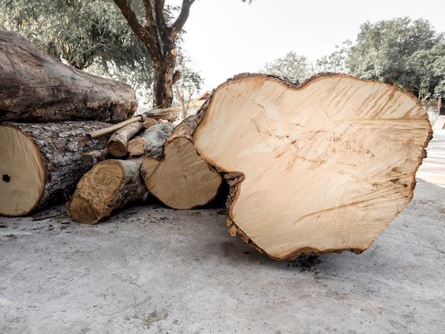 Kupa ściętych drzew powaliła się na ziemię.