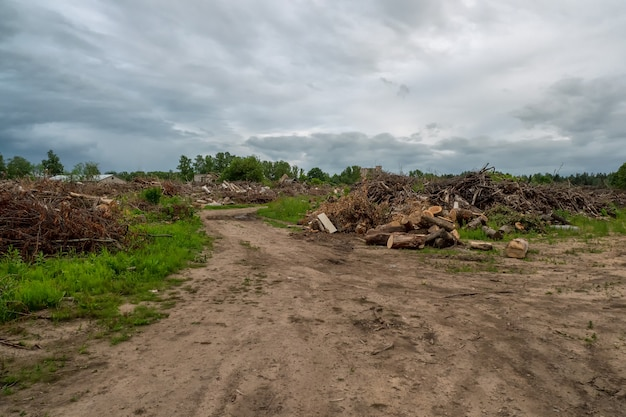 Kupie kłody sosny w tartaku do dalszego przetwarzania. obszar z porozrzucanymi ściętymi drzewami
