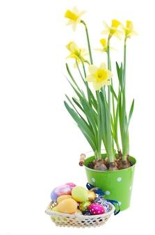 Kupie pisanki i kwiaty żonkila na białym tle