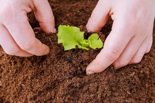 Kupie żyznej Ziemi Na Białym Tle. Sadzenie Pieprzu W Plastikowych Doniczkach Premium Zdjęcia