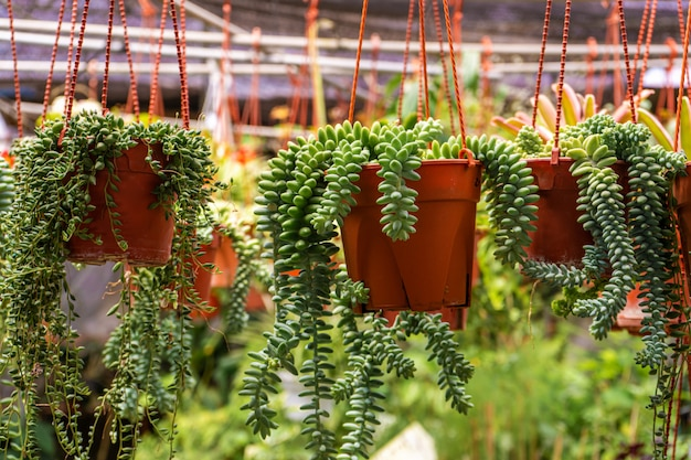 Kupuj rośliny domowe i kwiaty doniczkowe. prace ogrodowe.