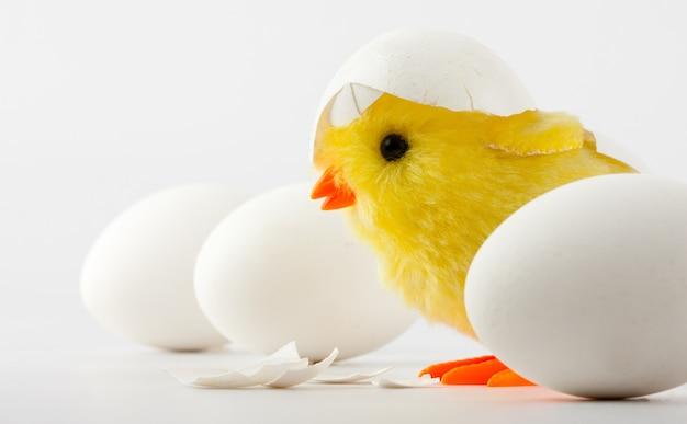 Kurczak dla noworodka