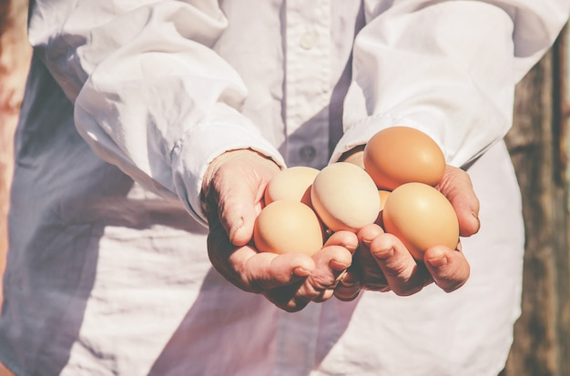 Kurczak domowe jajka w rękach. selektywna ostrość.