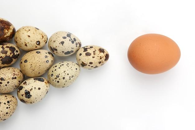Kurczak i jaja przepiórcze na białym tle