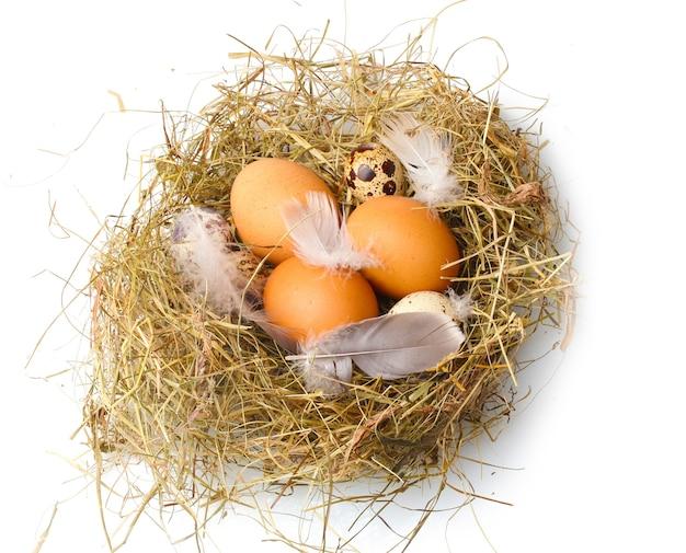 Kurczak i jaja przepiórcze w gnieździe na białym tle