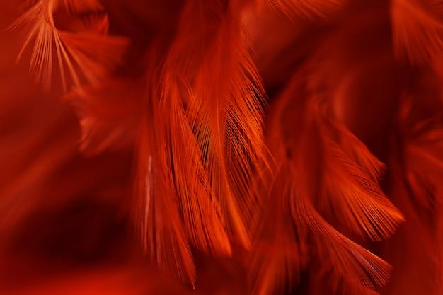 Kurczak pióra w miękkim i rozmytym stylu dla tła