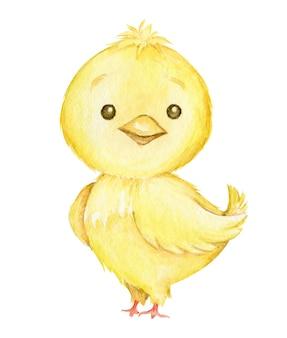 Kurczak, słodkie zwierzę, w stylu kreskówki,