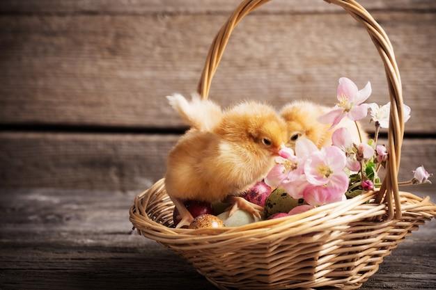 Kurczak z wielkanocnymi jajkami na drewnianym tle
