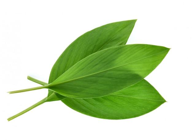 Kurkuma liście na białym tle