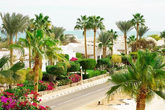 Kurort plaża z palmą na wybrzeżu morza czerwonego w sharm el sheikh synaj egipt