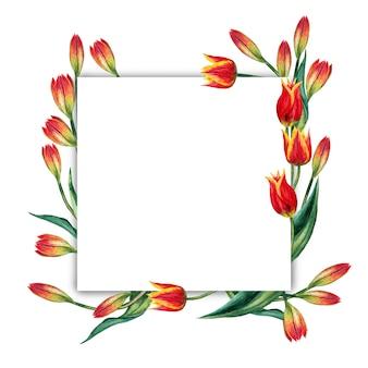 Kwadratowa rama realistycznych czerwonych tulipanów na białym tle. akwarela ilustracja