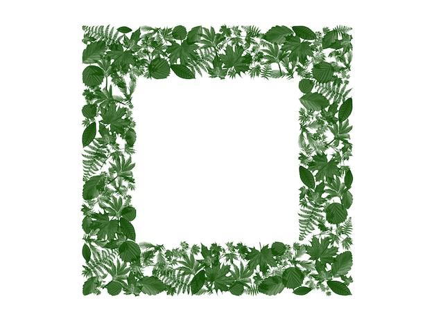 Kwadratowa ramka zielone liście wokół do dodawania tekstu i słów reklamowych