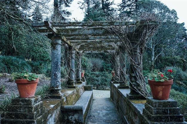 Kwadratowy łuk z kolumnami z korzeniami roślin w mistycznym ogrodzie
