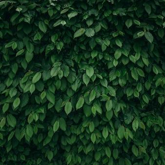 Kwadratowy tło naturalne zielone liście
