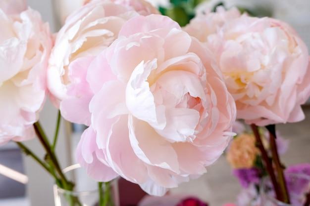 Kwiaciarnia z pięknymi wakacyjnymi kwiatami. duże piwonie na bukiet z bliska.