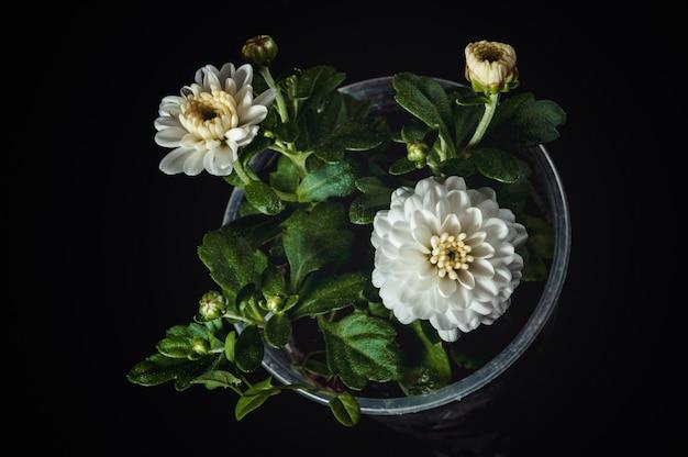 Kwiat chryzantemy białej i pąki w małym plastikowym kubku.