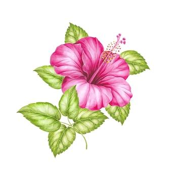 Kwiat czerwony hibiscus samodzielnie nad białym.