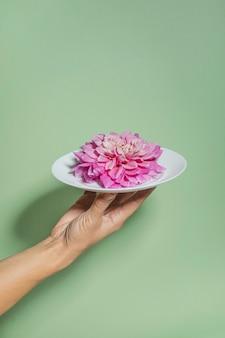 Kwiat dalii w talerzu w kobiecej dłoni jako poczęstunek. minimalna koncepcja kwiat żywności i prezent.