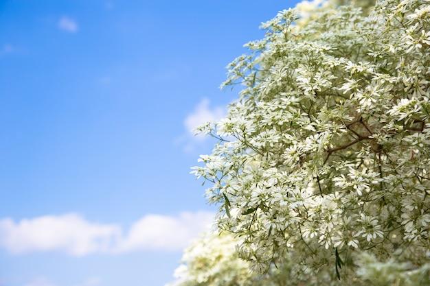 Kwiat euforbii z niebieskim niebem