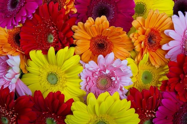 Kwiat gerbery