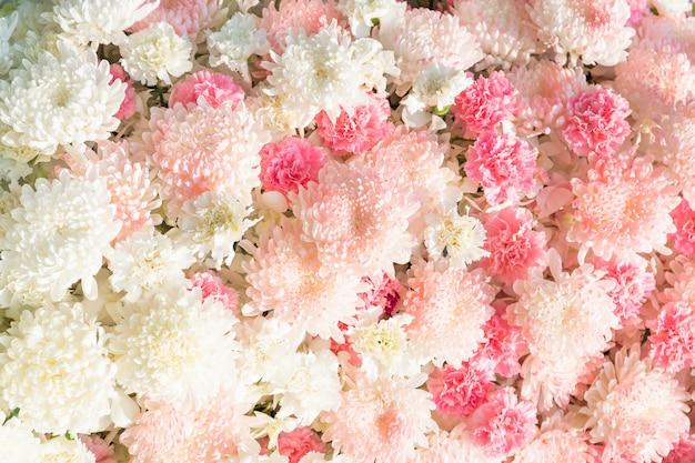 Kwiat goździka i kwiat chryzantemy