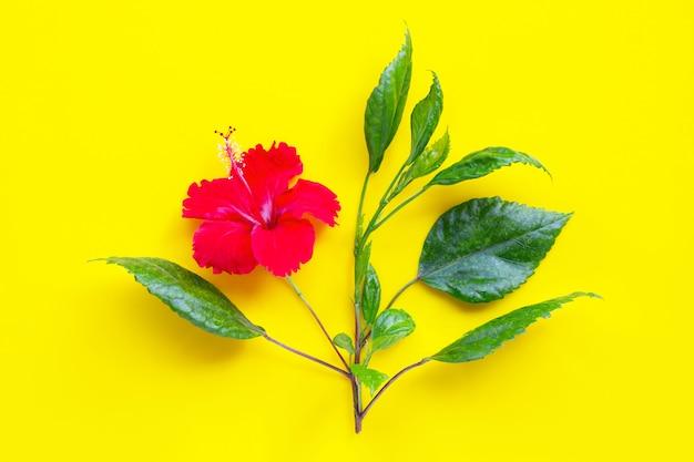 Kwiat hibiskusa z liśćmi na żółtym tle.