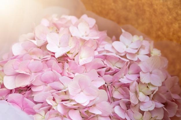 Kwiat hortensji z promieni słonecznych