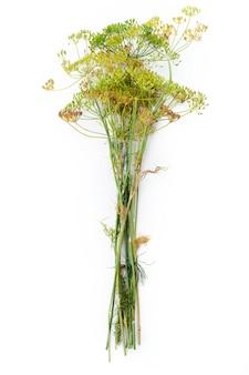 Kwiat koperku na białym tle