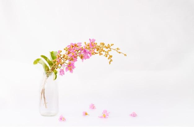 Kwiat królowej w butelce na białym tle