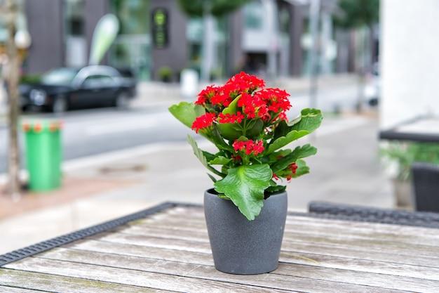 Kwiat kwitnący w doniczce na stole na świeżym powietrzu w hamburgu, niemcy. kompozycja kwiatowa, florystyka, dekoracje kwiatowe, projektowanie.