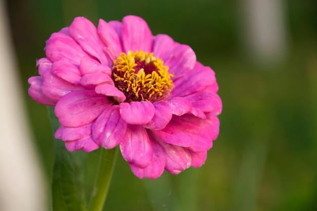 Kwiat kyiv piękne żółte podróże