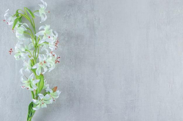 Kwiat lekkiej lilii, na białym stole.