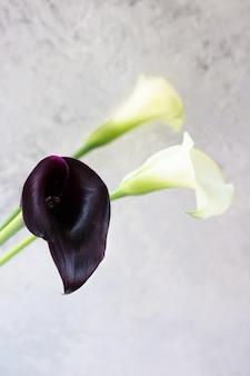 Kwiat lilii kalii na lekkiej ścianie