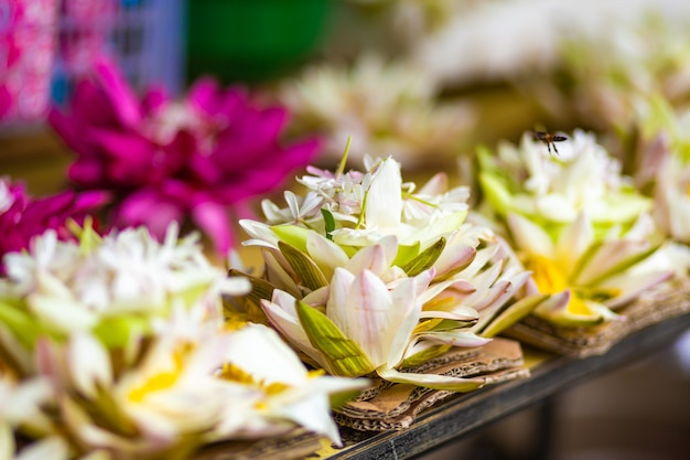 Kwiat lotosu biały kwiat z bliska.