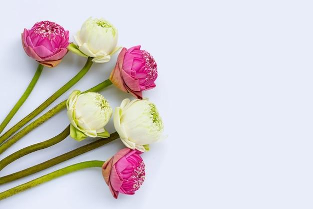 Kwiat lotosu. widok z góry