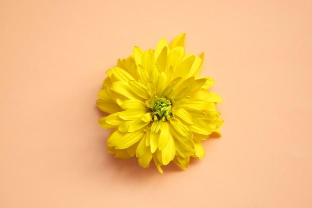 Kwiat makro. naturalne tło z miejscem na tekst.