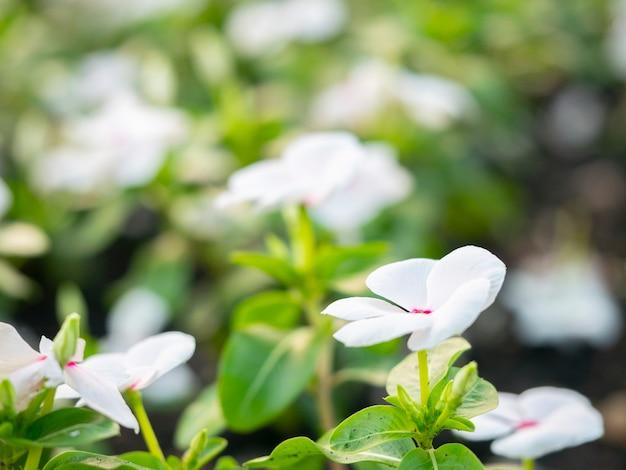 Kwiat miękka ostrość