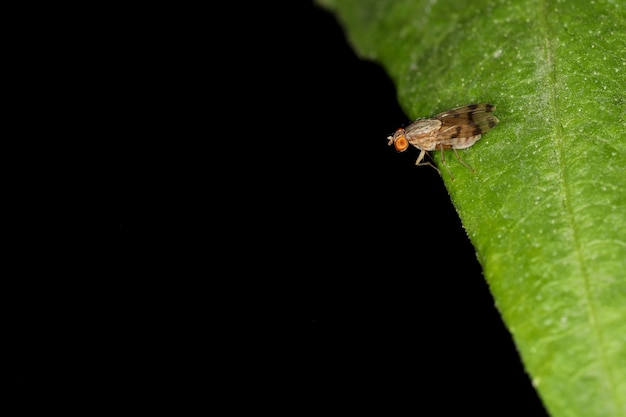 Kwiat muchy to mały owad na zielonych liściach