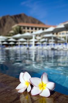Kwiat na basenie