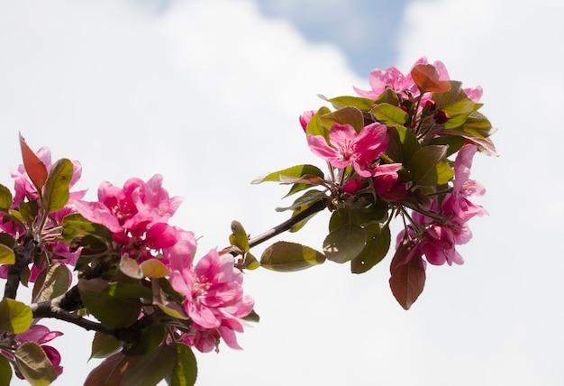 Kwiat na drzewie, kwitnące drzewo