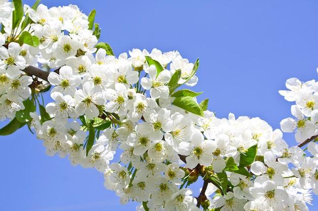 Kwiat na niebieskim niebie