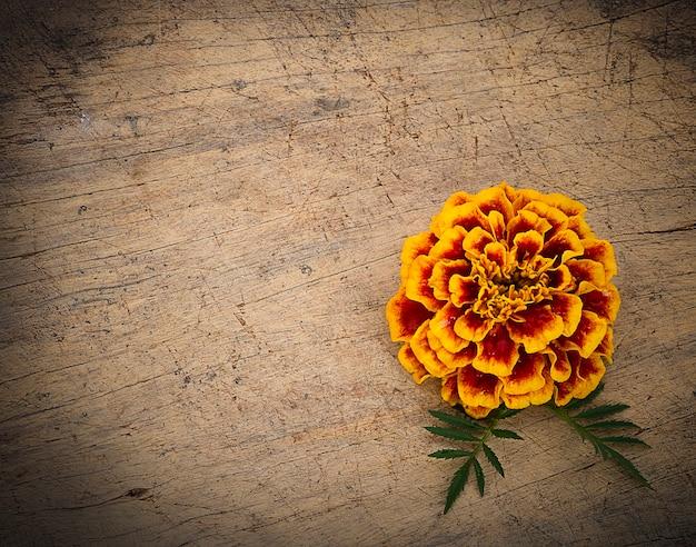 Kwiat nagietka na białym tle na podłoże drewniane