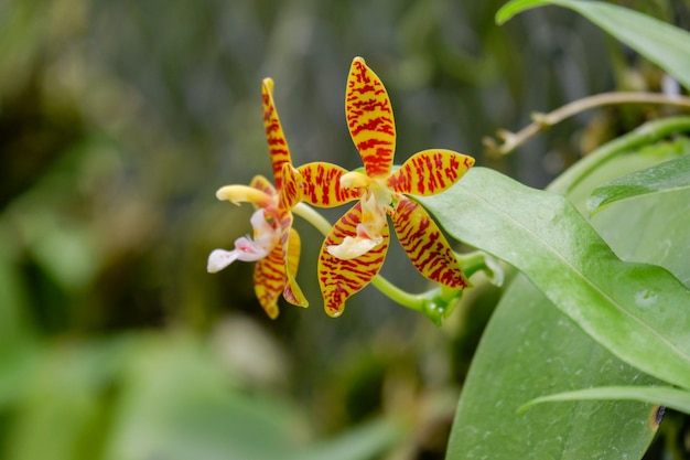 Kwiat orchidei kwitnący w przyrodzie
