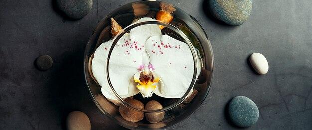 Kwiat orchidei unosi się w okrągłym akwarium