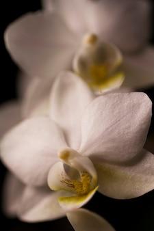 Kwiat orchidei w kolorze białym z bliska zdjęcie.