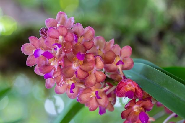 Kwiat orchidei w ogrodzie orchidei w zimowy lub wiosenny dzień